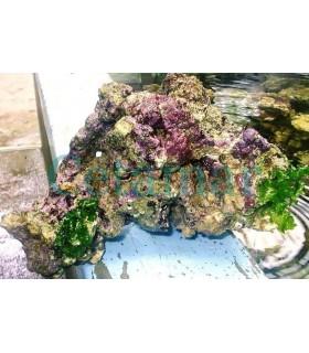 COMBO 6kg Roca Viva + 4kg Roca Muerta